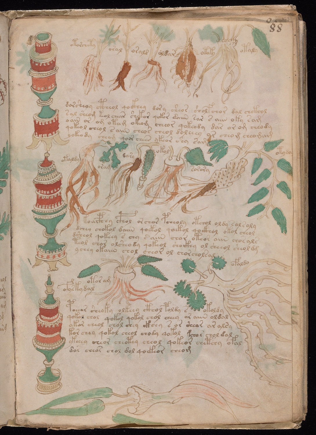 A page of the Voynich manuscript showing a number of plant like drawings and several paragraphs in an unknown language or encrypted text.