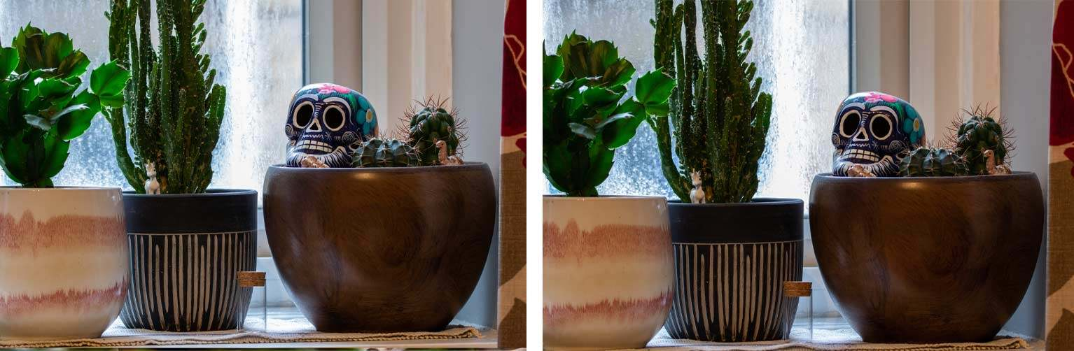 Comparison of two photos of a pot plant with a Mexican painted porcelain skull and various animal toys. Left image is mildly bluer.