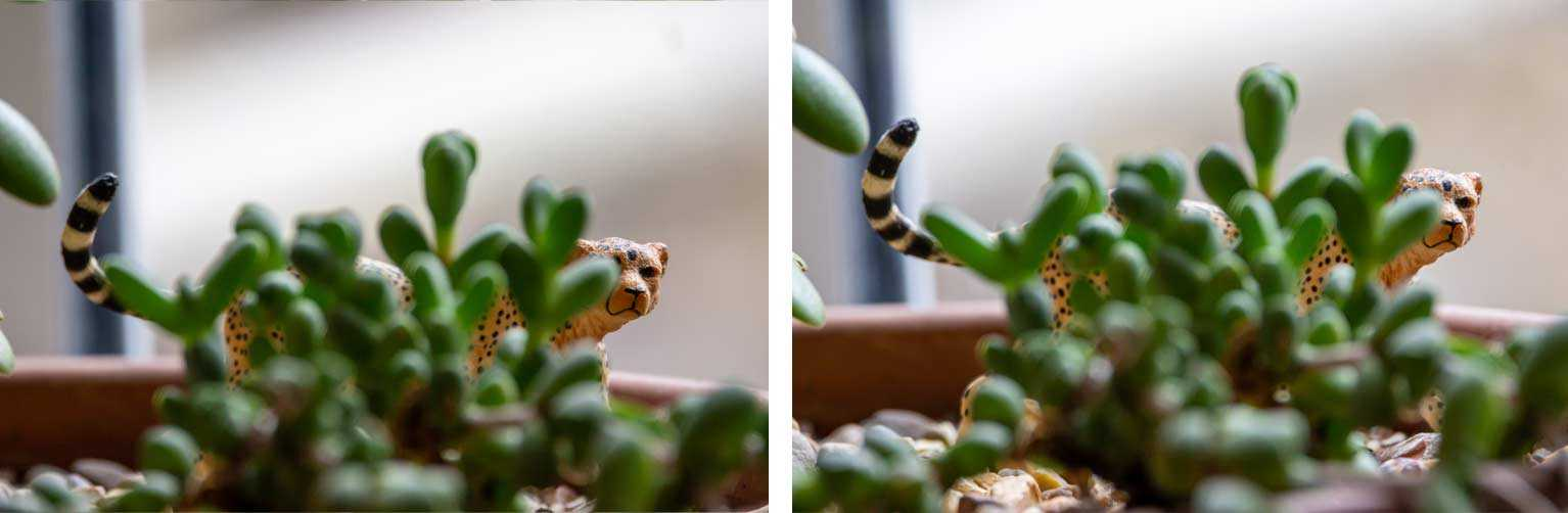 Two images of a toy cheetah peaking out from a behind a succulent in a plant pot.