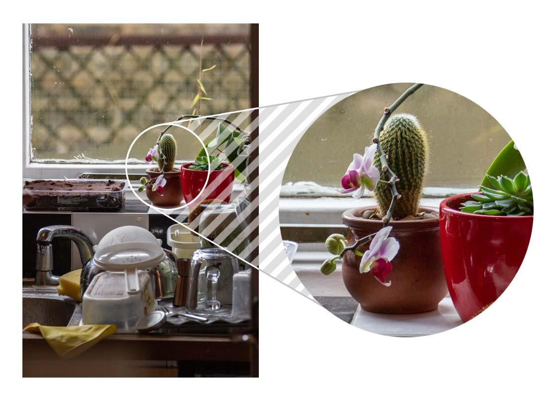 Washing up on the sink with a small collection of cacti and orchids on the window sill beyond. The flowers on one orchid are magnified to show they're sharp.
